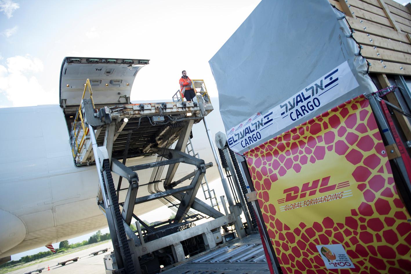 Imagen de la operación de traslado de la jirafa
