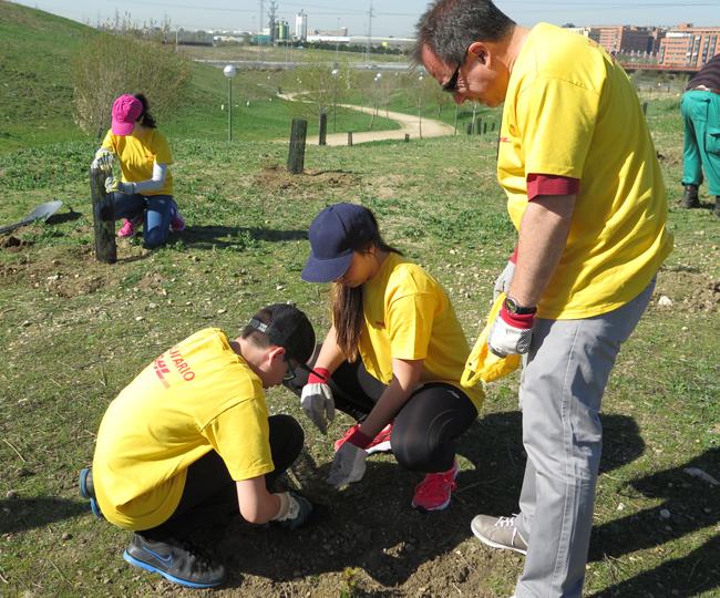 Plantación de árboles por parte de voluntarios de DHL en Madrid