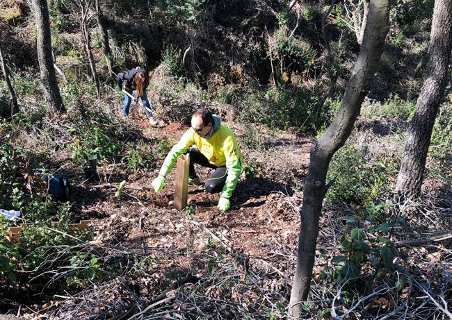 DHL realiza una plantación de 400 árboles en Barcelona